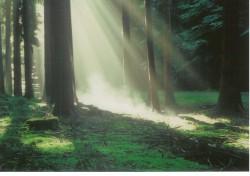 Morgen im Wald